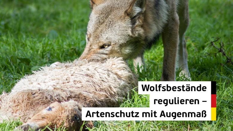 Wolfsbestände regulieren - Artenschutz mit Augenmaß
