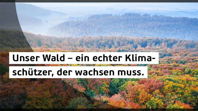 Europas Wälder schützen und nachhaltig nutzen