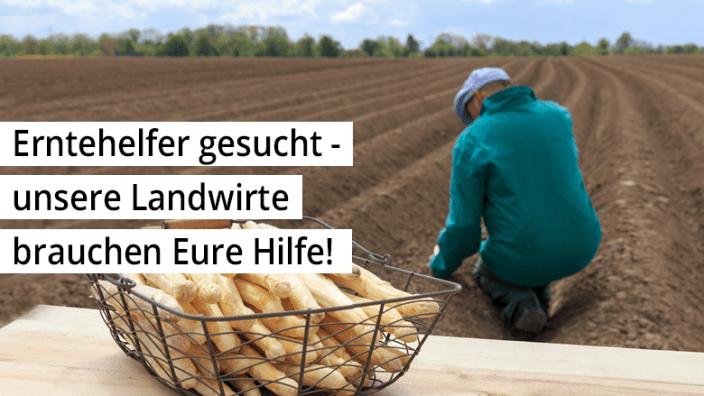 Erntehelfer gesucht - unsere Landwirte brauchen Eure Hilfe!