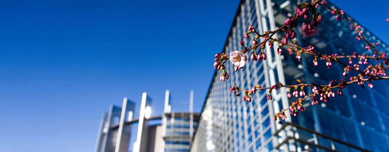 CDU/CSU-Gruppe in der EVP-Fraktion im Europäischen Parlament